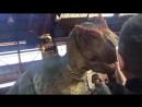 Вот как снимают фильмы про динозавров (6 sec)