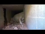 Спасение собаки, которая застряла внутри бетона