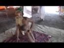 102 летний садху , делающий йогу на КумбхаМеле в Насике
