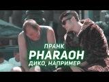 PHARAOH - ДИКО, НАПРИМЕР  ПРАНК