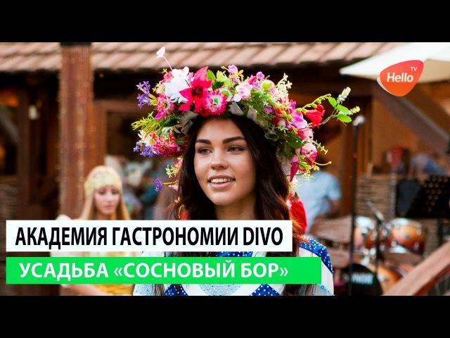 Академия гастрономии DiVo 2017   Сосновый Бор