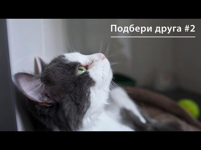 Дорога домой. Трогательные истории спасения котиков. Серия 2