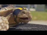Музыка из рекламы Билайн + Alcatel - Черепаха (Россия) (2014)