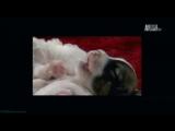 «Симпатичные котята и щенки: Лучшие животные друзья» (Познавательный, животные, 2013)
