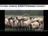 Почему армяни блеют как бараны  в коментариях