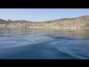 Крым. дельфины в районе Коктебеля