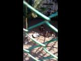 05.2017_Зинаида и Зоопарк 035