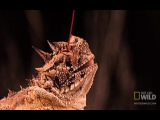 Рогатая ящерица для Тарантино  Horned Lizard in Pulp Fiction