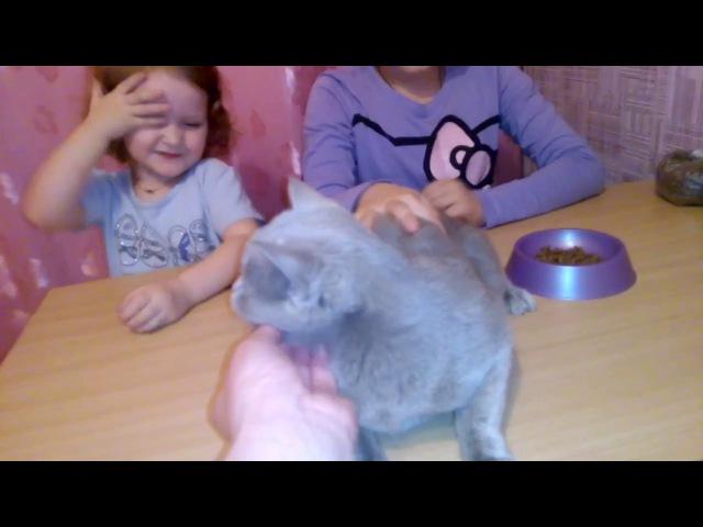 Мои домашние любимцы. ЧАСТЬ 3.Кошечка Нала.