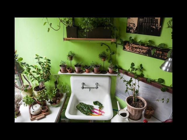 Ep 023, Part 2: 670 PLANTS HOUSEPLANT TOUR, Kitchen (Summer 2017)