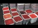 Видеокадры утилизации 25-ти тонн браконьерской красной икры на Камчатке