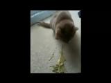блюющие техно котци