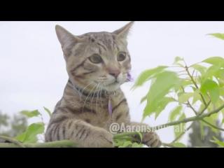 The ultimate aaronsanimal vine compilation 2017