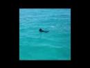 Дельфин играет с собачкой.