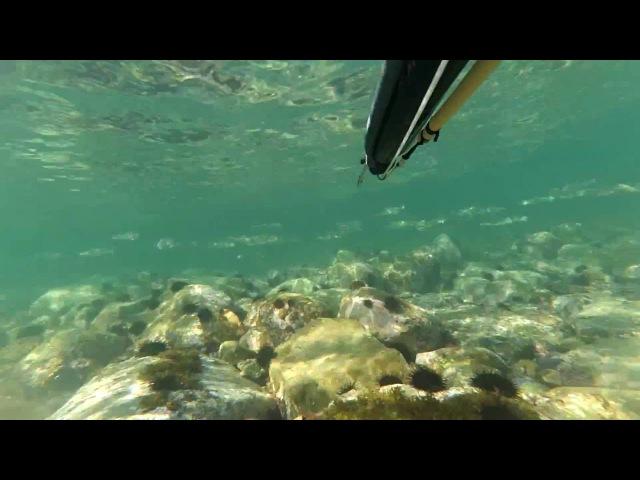 Подводная охота. Владивосток. Осеннее море.