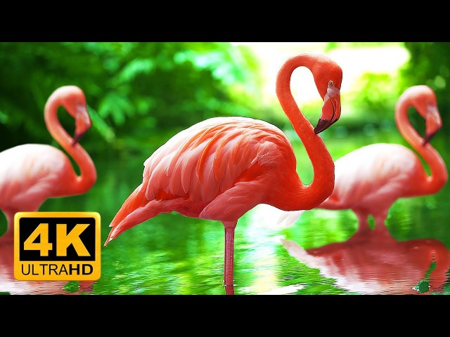 Breathtaking Colors of Nature in 4K 🌻🐦Birds Flowers - Sleep Relax Meditation Music - 2 hours UHD