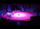 Носорог на премьере Жираф-шоу в Новосибирске