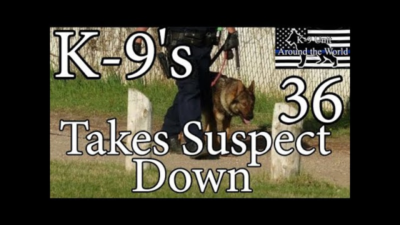 K-9's Takes Suspect Down 36
