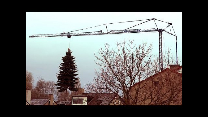 Huge Tree removal from garden with a crane
