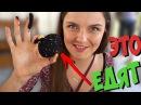 ЧЕРНЫЕ яйца / КОРЕЙЦЫ правда ЕДЯТ СОБАК! / Берсик поет песню Шакиры / Влог /Семйные влоги