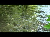 G E N E Lovely Blossoms Ручьи и реки