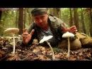 Гриб зонтик сосцевидный лесной деликатес