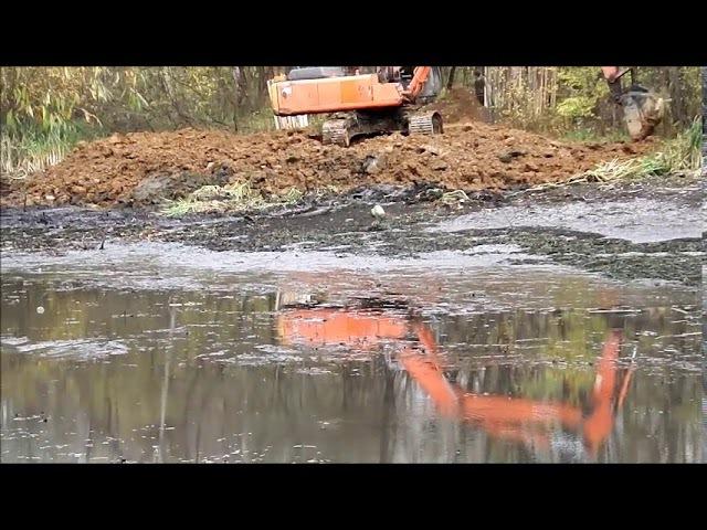 Агония гибнущей рыбы (первый этап собянинской реабилитации прудов в парке Покро...