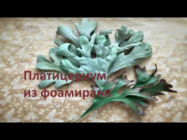 Веточки зелени из фоамирана Платицериум папоротник Олений рог