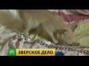 Замученный самарскими живодерками котенок выжил