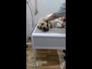 у ветеринара 1