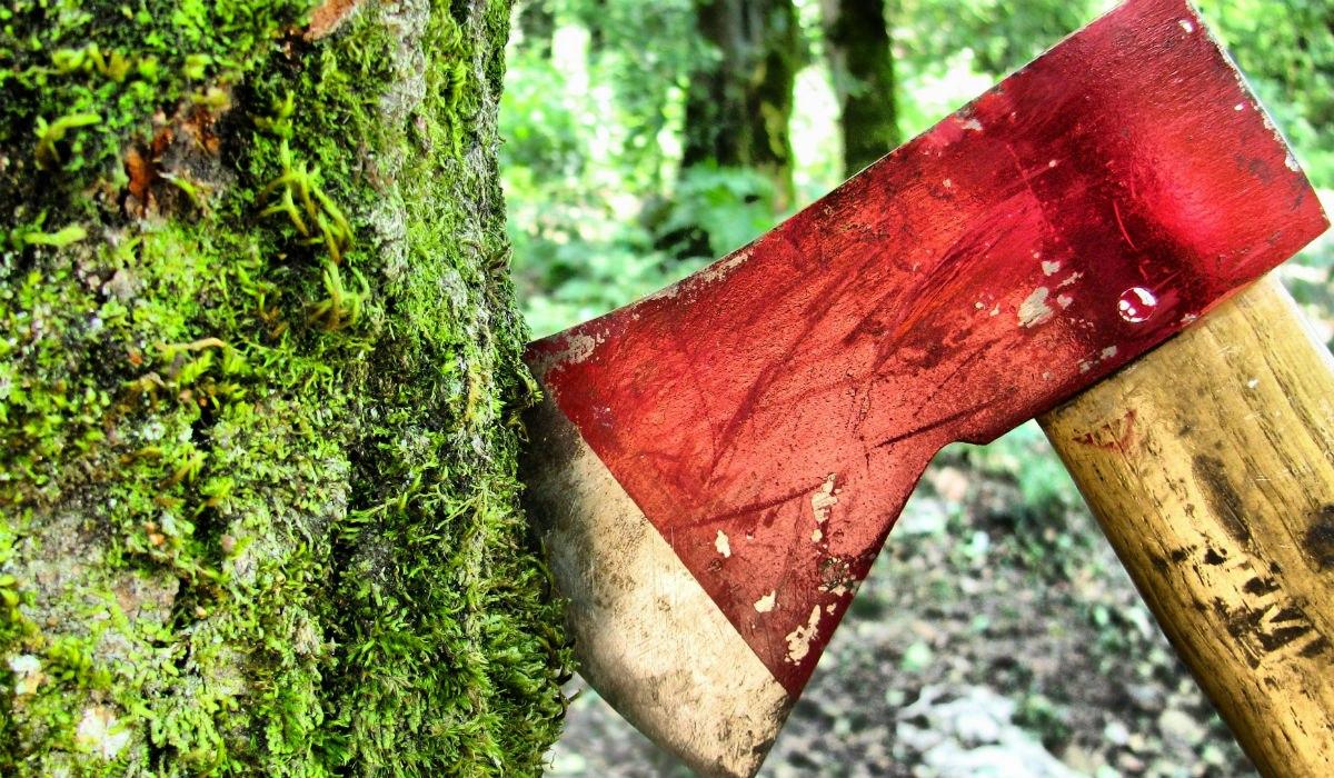 Замдиректора лесозаготовительной организации вырубил нетедеревья иотправится вколонию