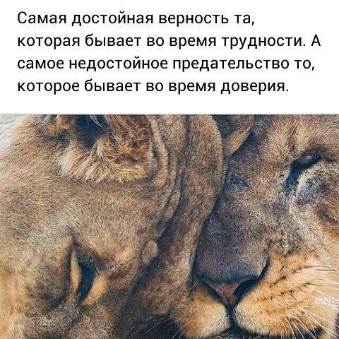 Фото №456244766 со страницы Ивана Боровского