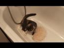 Сеня в ванной