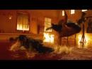 (Моай-Тай) Честь дракона Тони Джаа