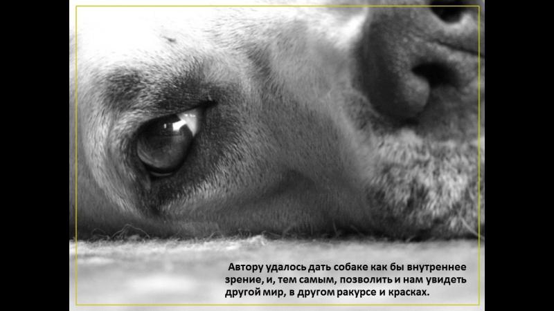 буктрейлер по книге Г. Троепольского «Белый Бим, Черное ухо» библиотека им. Н.В. Гоголя