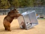 Казашка и медведь