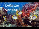 Дайвинг.Красота подводного мира. Красное море в Египте. Under the Red Sea