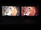 Dell M4800 3K IPS K2100M vs Dell M4700 RGB K2000M - Dung.ebay :)