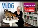VLOG Последние новости и планы Отпуск кошки реклама ковер