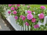 Розы Ангелов творенье! Hayley Westenra Невероятно красивая мелодия