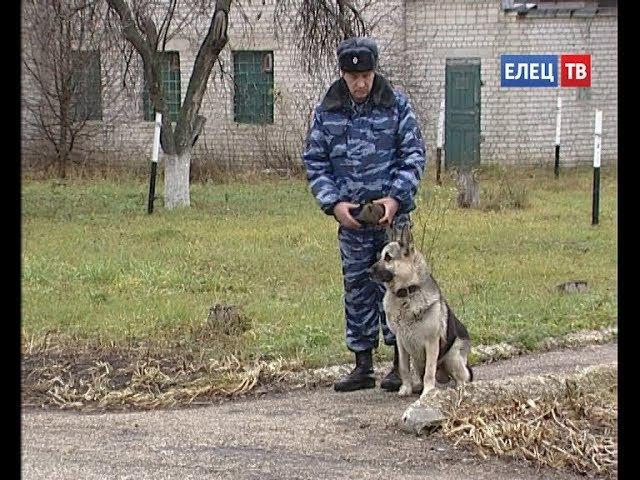 Четвероногие охранники: каждый день они заступают на службу вместе с сотрудника...