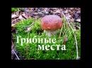 Белые грибы Киев Киевская область 2017