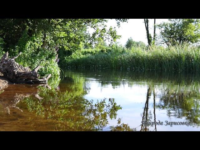 Река. Природа. Пение птиц. Журчание воды. Релакс. Медитация. Йога. Сон. Место силы. ...
