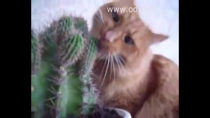 Прикол попугай и кот плюс с кактусом
