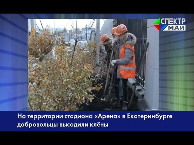 На территории стадиона «Арена» в Екатеринбурге добровольцы высадили клёны