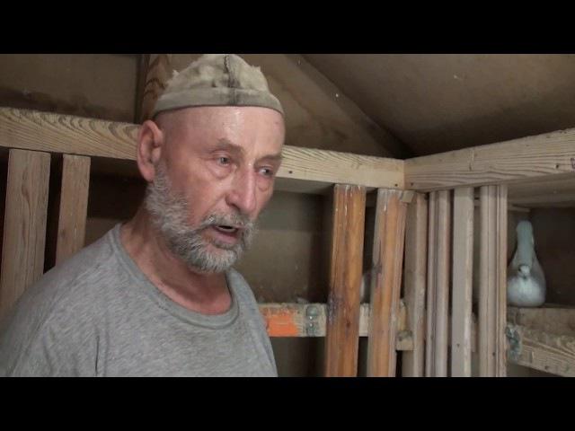 В гостях у голубевода Виктора Подрезова. Часть 3