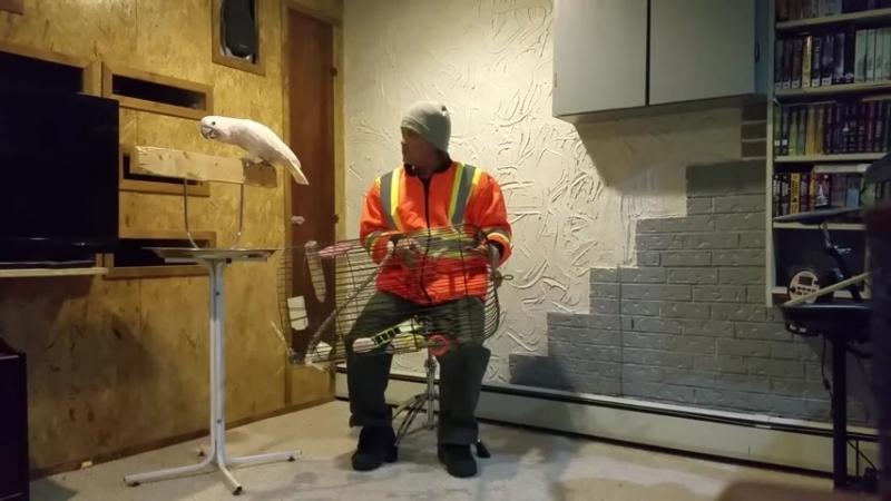 Ругающийся попугай стал героем Интернета – Рамблервидео