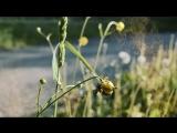 #nature #4_елементи #природа #КНУКМ #ЛФ_КНУКМ #Four_elements