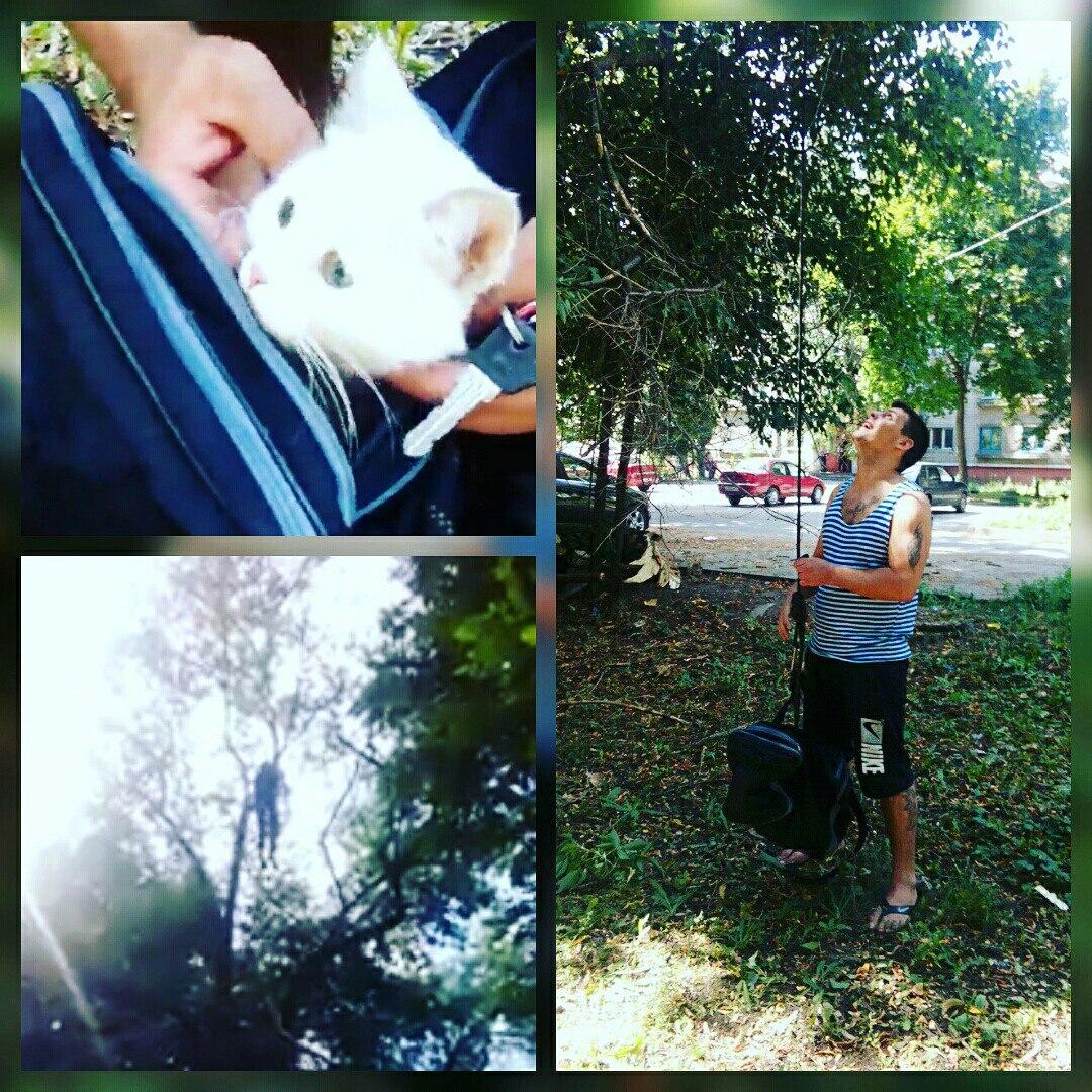 Герой из Липецка: мужчина спас кота после поста в «ВКонтакте»