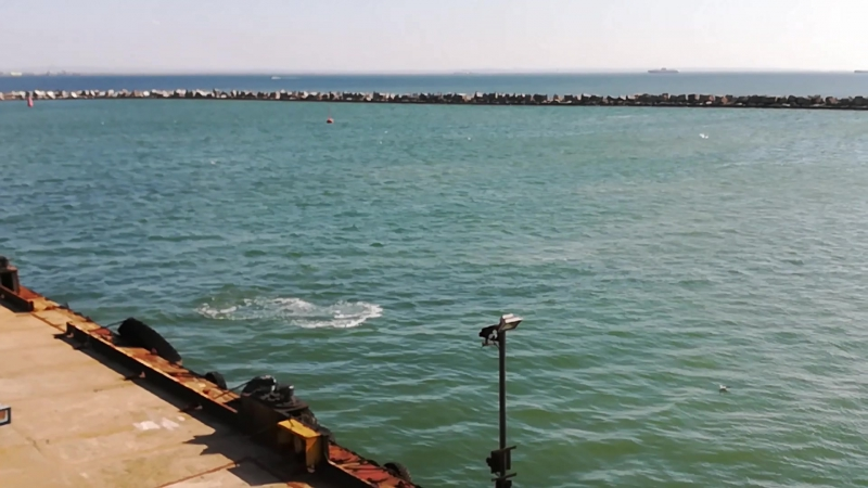 Дельфины в Керченском проливе